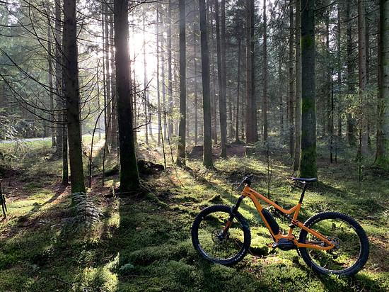 Meta im magischen Wald