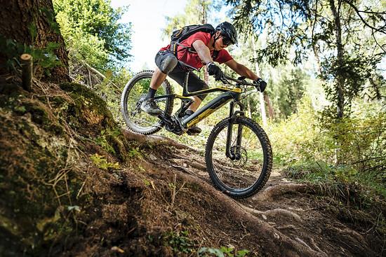 Sportliche Downhill Action über Wurzelwerk