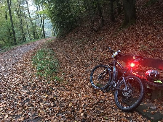 Pause Herbstwald